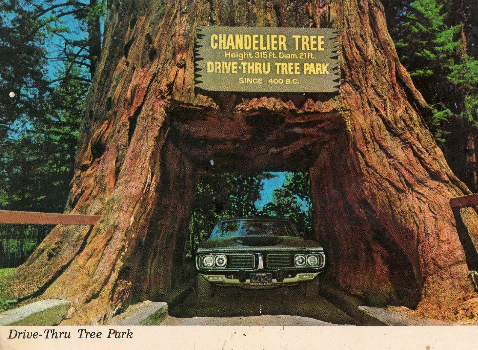 Postcards from the lost world the drive thru tree jc lillis drive thru tree arubaitofo Choice Image